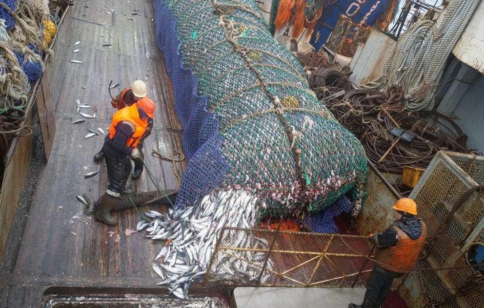 Рыбная отрасль отличилась зарплатами